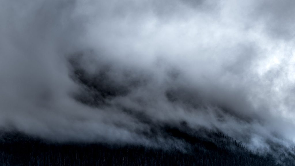 Dense white clouds loom over a forest
