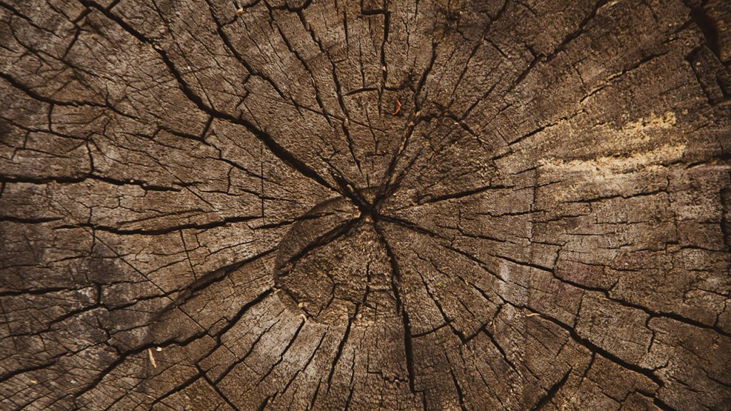 Dark, brown, cracked texture on the inside of a tree stump